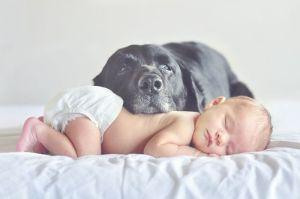 dogsandbabies1
